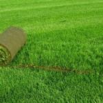 Рулонный газон и его устройство
