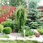 Создание композиции из деревьев и кустарников в частном домовладении