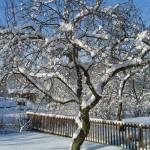 Уход за садом в зимний период